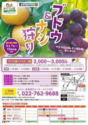 【季節限定】ブドウ&ナシ狩り!